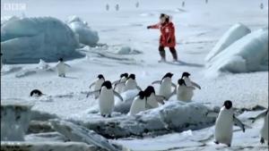 Pingüinos encima del hielo con el presentador