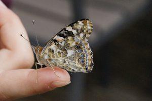 mano-sujetando-mariposa